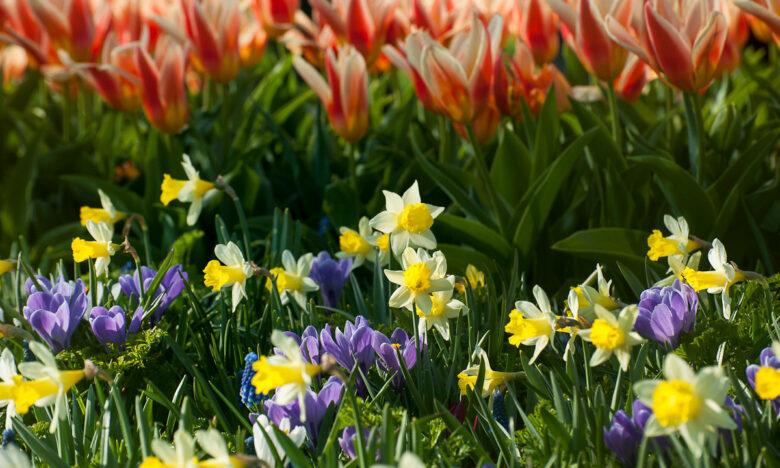 bloembollen planten-4